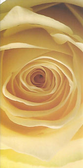 PMC-rose.jpg