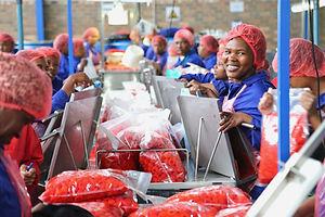 women_sorting_cherry_peppers2.jpeg
