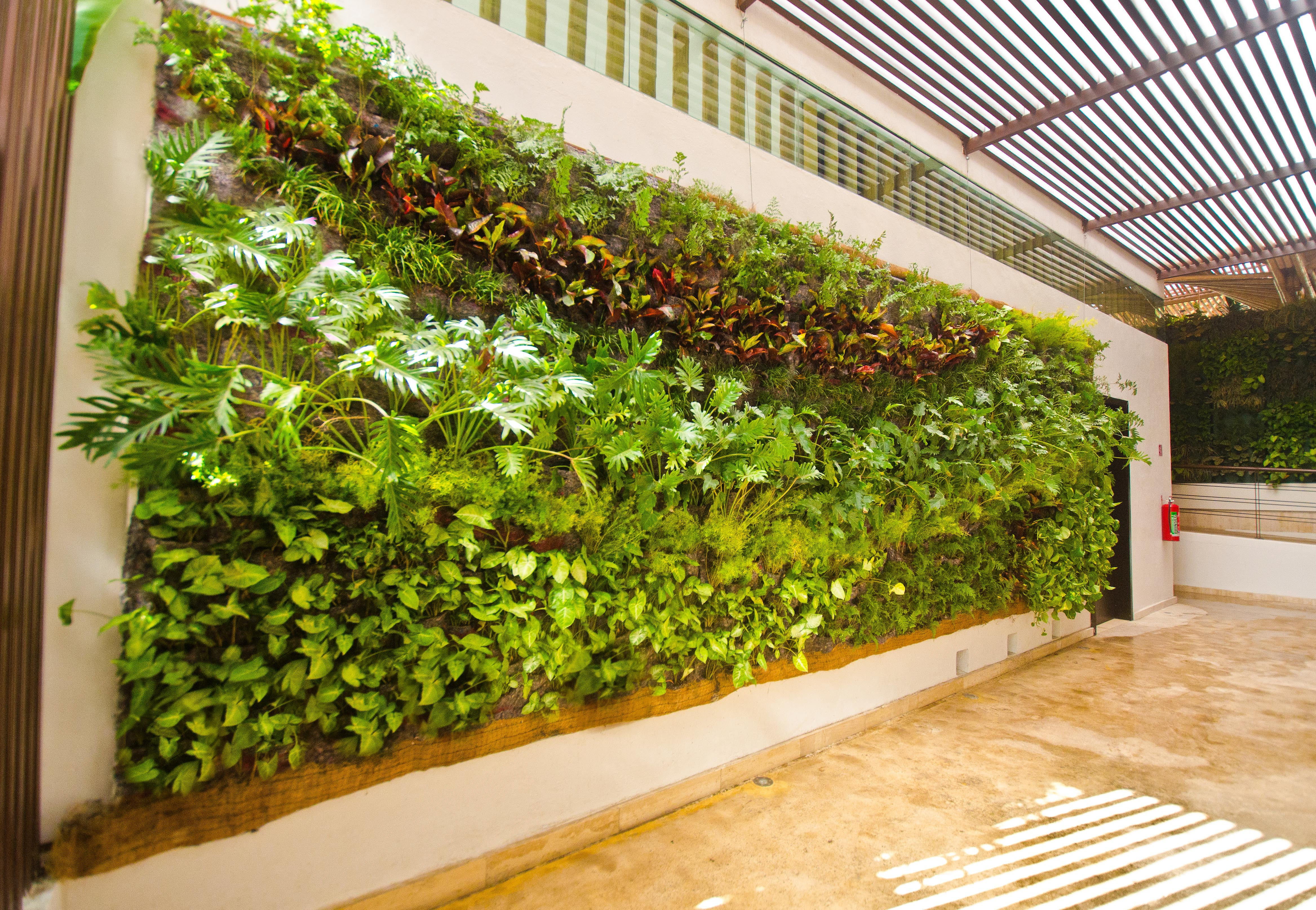 Muros verdes ciudad de m xico ecoyaab jardines verticales for Muros verdes verticales