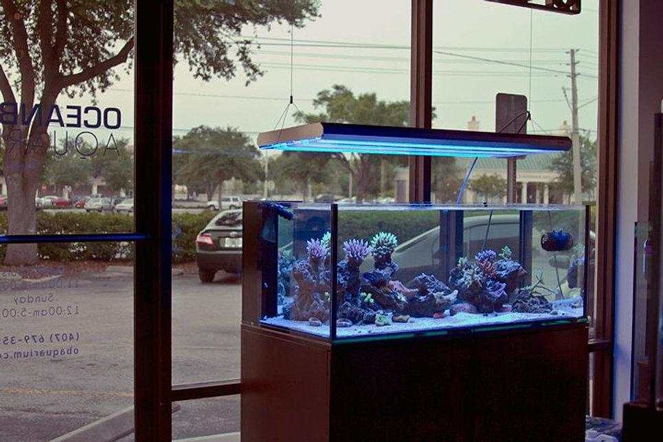 Ocean Blue Aquarium | Display Tanks