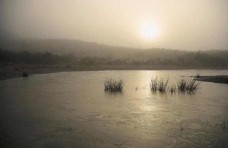 Dusky Dawn