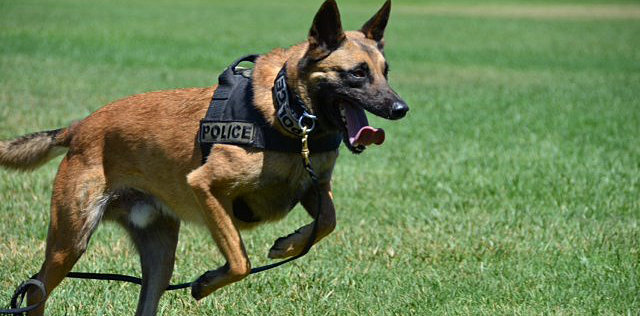 I2j3p as well Tactical K 9 Training Tips For Militia Dogs further Midwestdigitalmarketing moreover 201431573064 likewise Guides Choice Chest Holster. on tactical dog harness