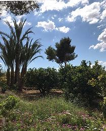Huerta de Orihuela