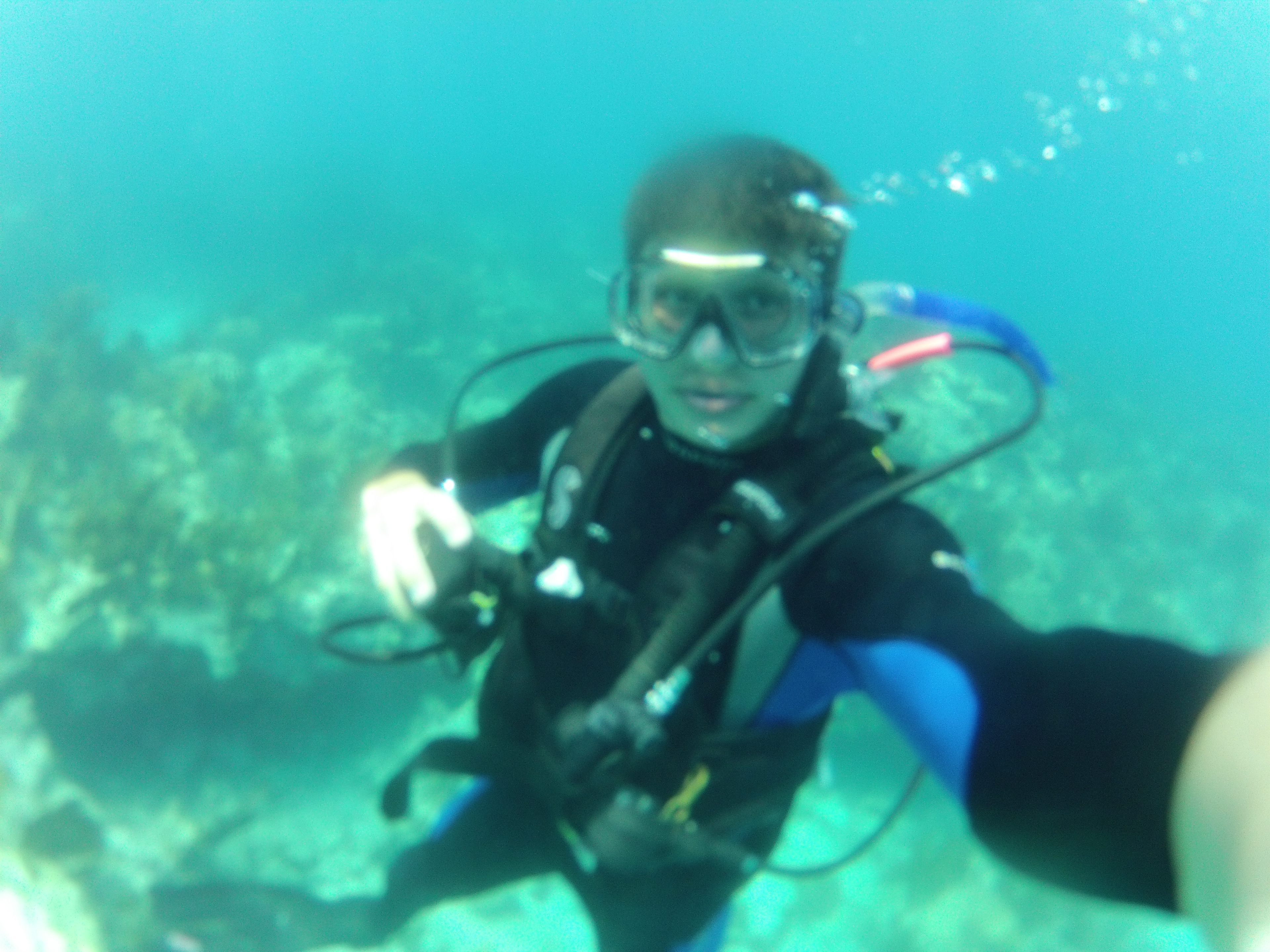 1 Rated Scuba Dive Snorkeling Freedivingspearfishing