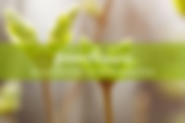 gemmotherapie_qui_nutri-640x427.png