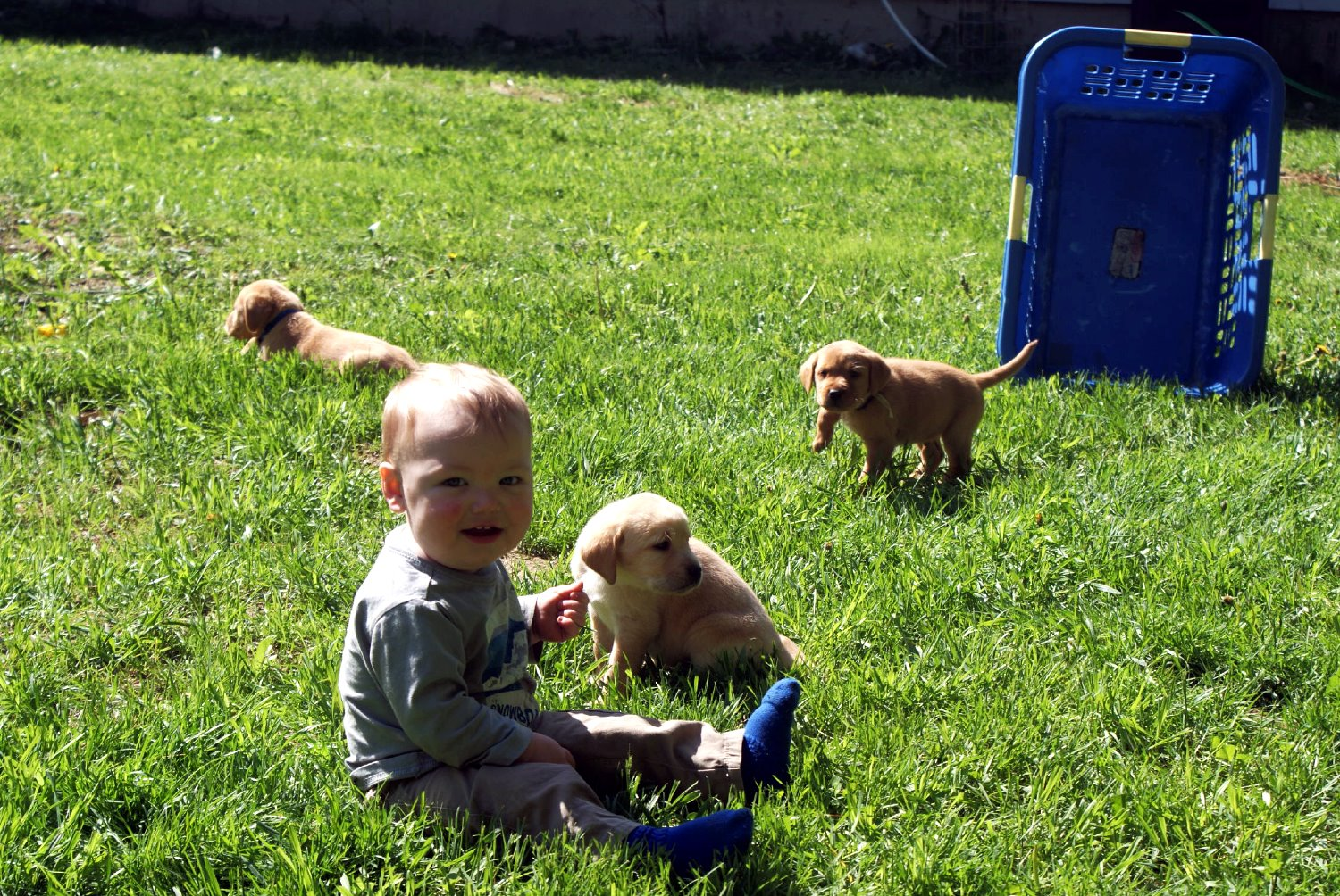 Pictures Of Dog Breeding
