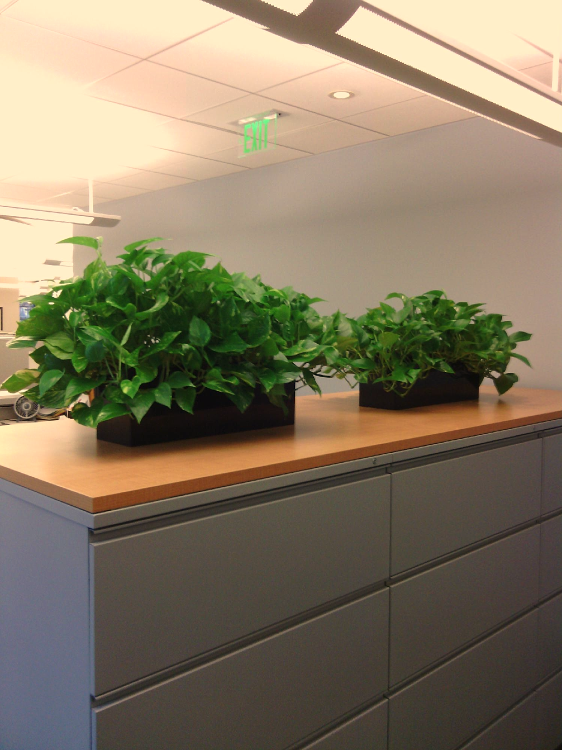 Topsiders With Three Pothos Each