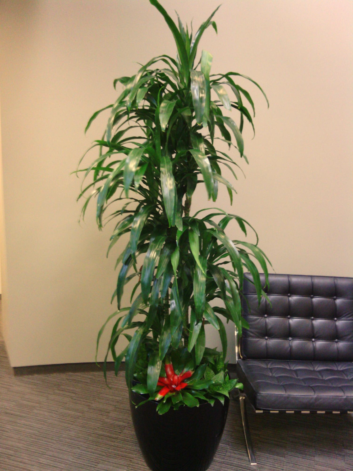 143ad3 - Tall office plants ...