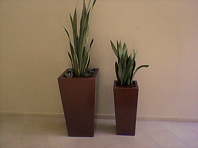 Rent your plants plant service office plants office plant service tall squares special planters - Tall office plants ...