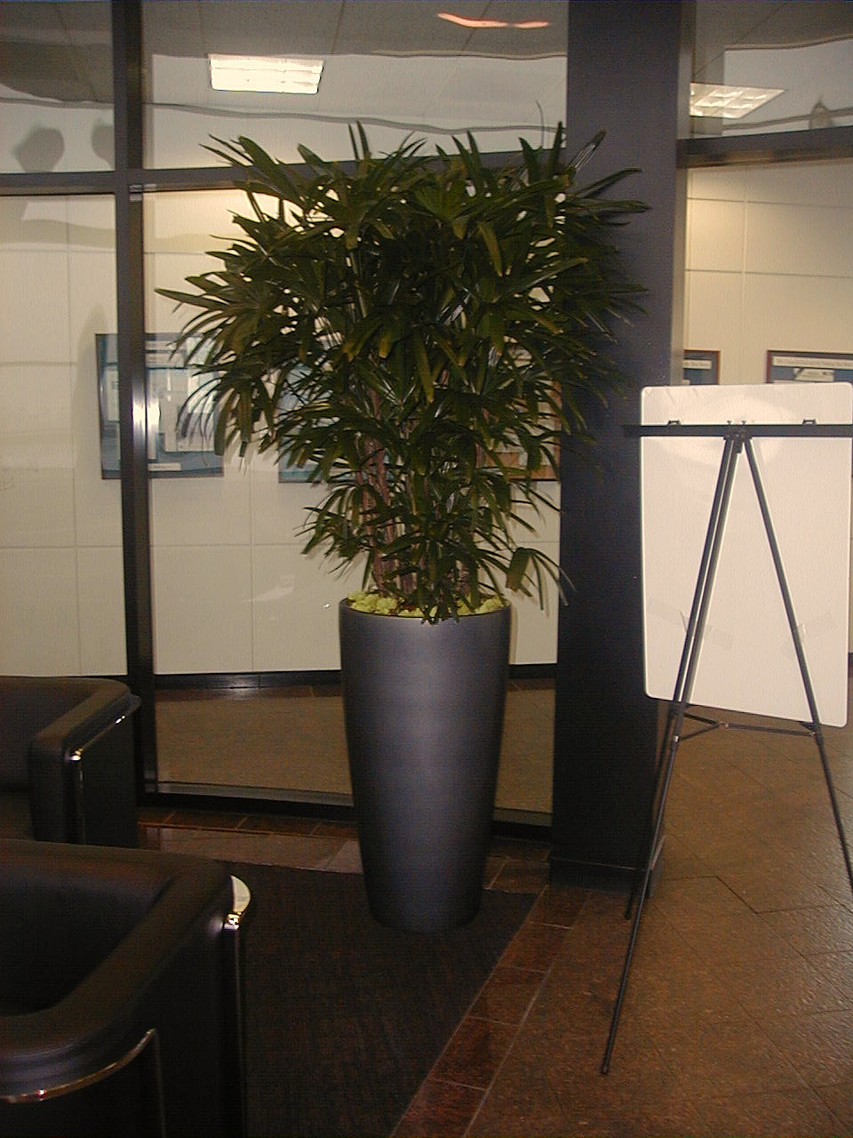Special planter tall curve - Tall office plants ...