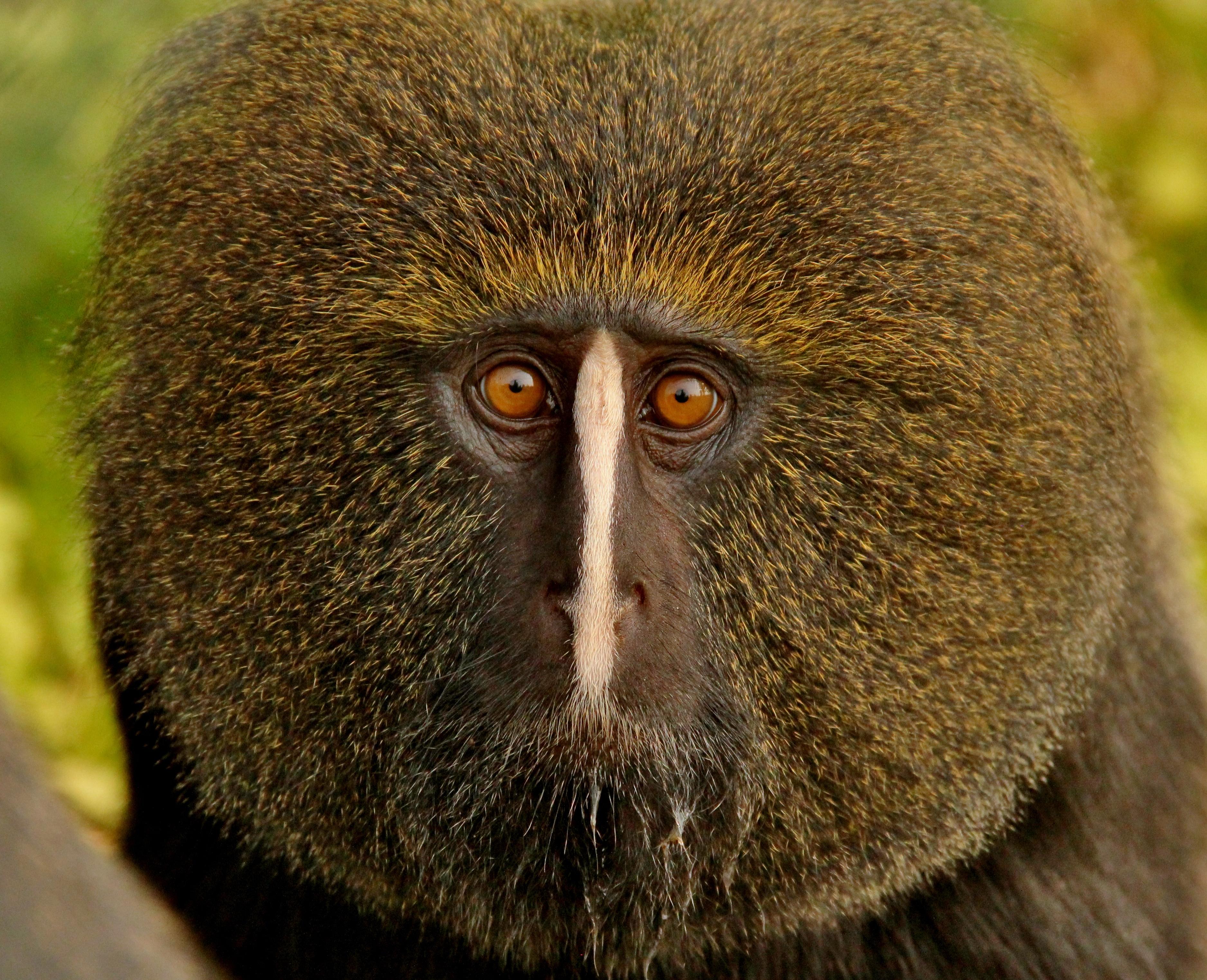 """Résultat de recherche d'images pour """"centre de rehabilitation des primates de lwiro"""""""