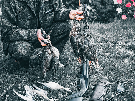 killed-in-the-autumn-hunting-wild-ducks-are-spread-out-on-the-green-grass-bird-hunting-is-