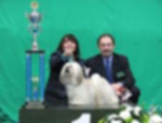 lhasa apso kampioen lhasa apso kennel lhasa apso fokker