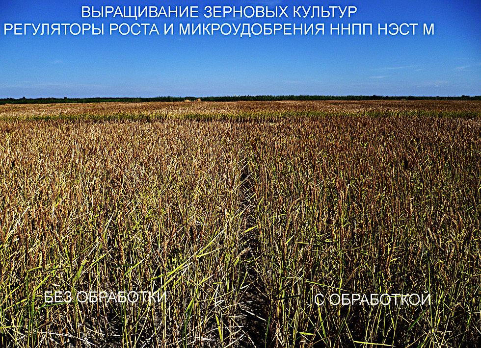 ОКВЭД - Выращивание зерновых и зернобобовых культур 47