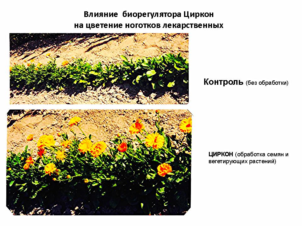 силиплант универсальный 1.5 мл инструкция по применению - фото 7