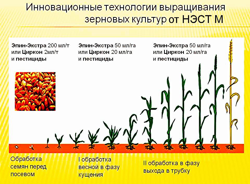 Циркон Стимулятор Роста Инструкция Цена - фото 10