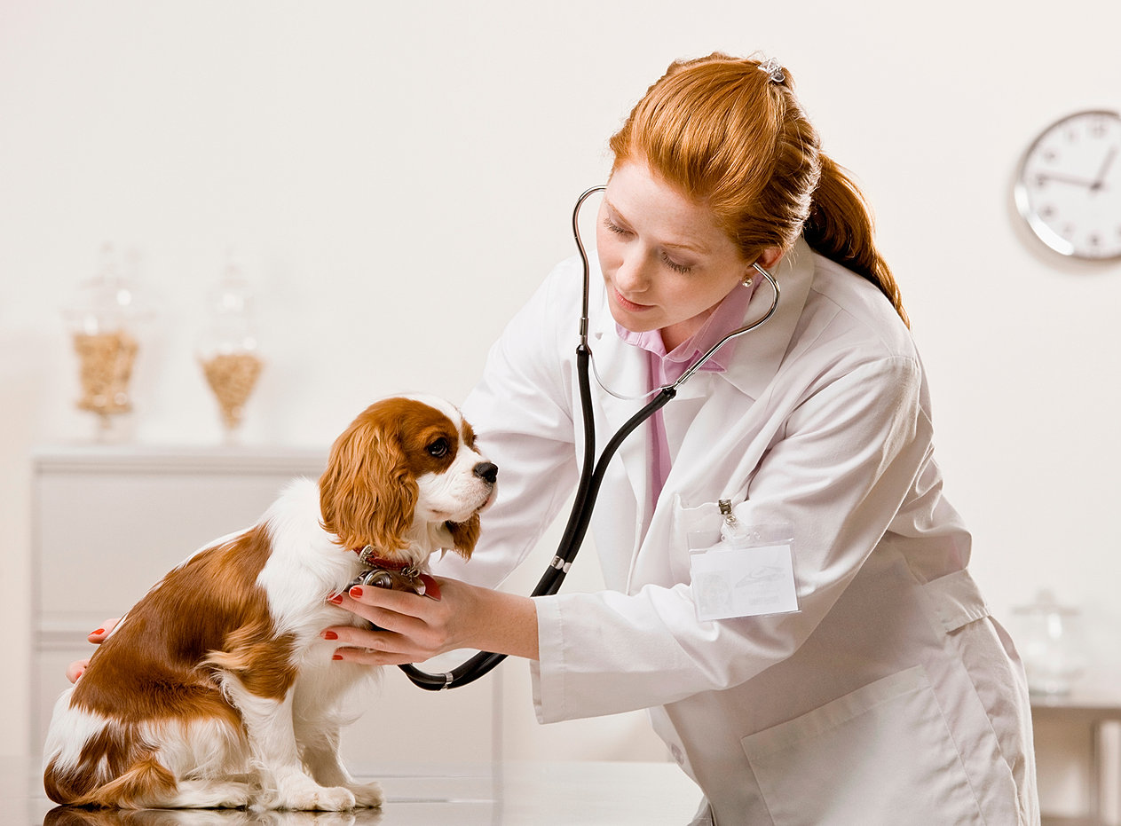 вакансии ветеринарный врач спб и ленобласти