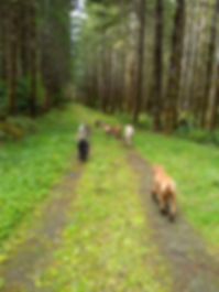 7 dogs on PB road.jpg