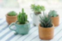 Various types of mini cactus,zebra plant