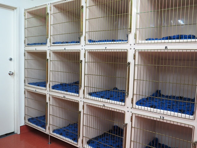 Carlyle Vet Clinic Vet Services   Separate cat cages with ...
