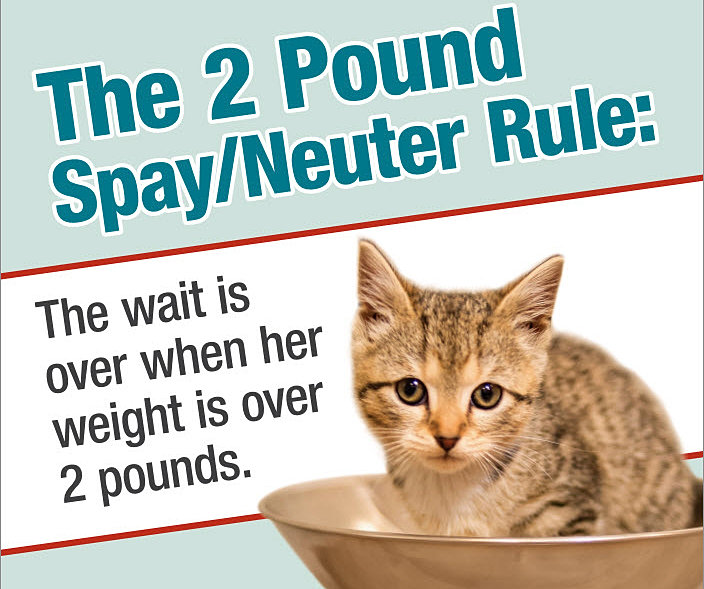 spaying neutering Spaying and neutering prevent unwanted litters, help protect against some serious health problems, and may reduce many of the behavioral problems associated with the mating instinct removing a female dog or cat's ovaries eliminates heat cycles and generally reduces the unwanted behaviors that may lead to owner frustration.