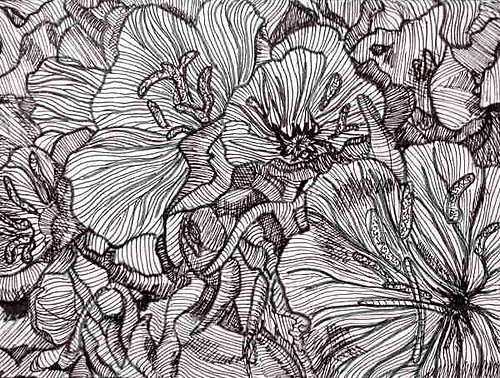Black And White Line Drawing Flower : Dashed and contour line drawings complex simplicity in a black