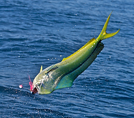 Dolphin Guatemala