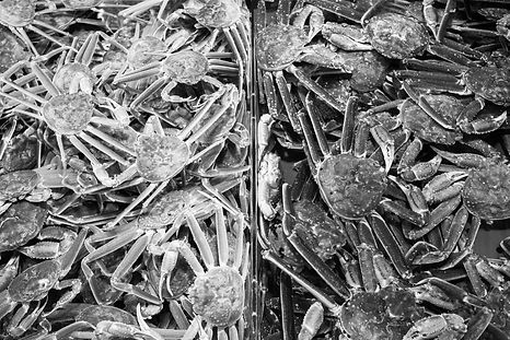 black_white_crab.jpg