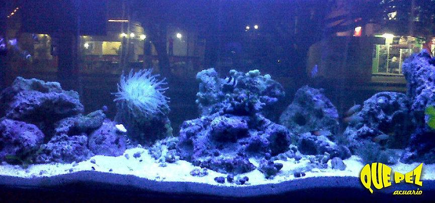 Que pez acuario peces de agua salada for Mantenimiento piscina agua salada