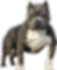 toppng.com-itbull-silhouette-png-bully-p