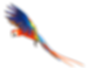 Macaw-PNG-Pic_edited.png