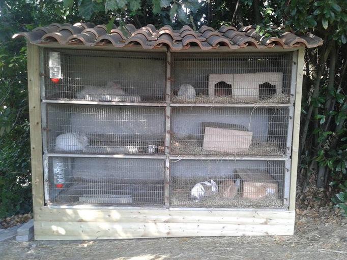 elevage les petites zeilles elevage de lapins nains. Black Bedroom Furniture Sets. Home Design Ideas