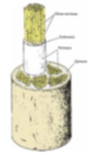 fig 12.jpg