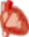 heart-2028154_960_720.png