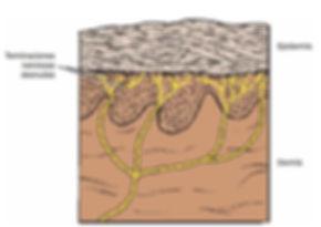 Figura 21.jpg