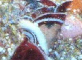 1994-1995 Prins Jules van Vucht 015.jpg