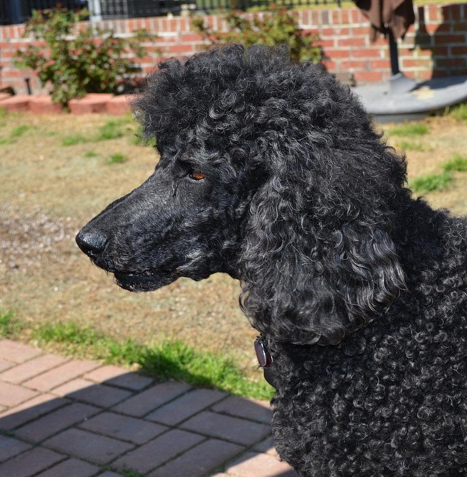 Dog Eared Corner Columbia Sc