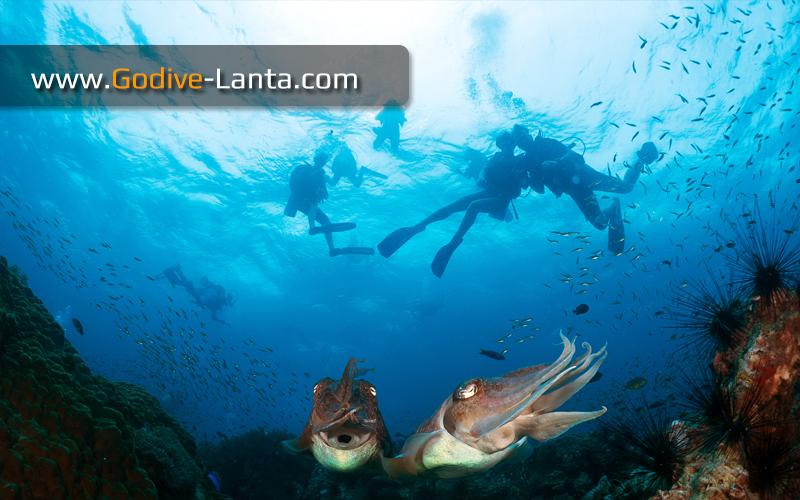 marine biology thesis