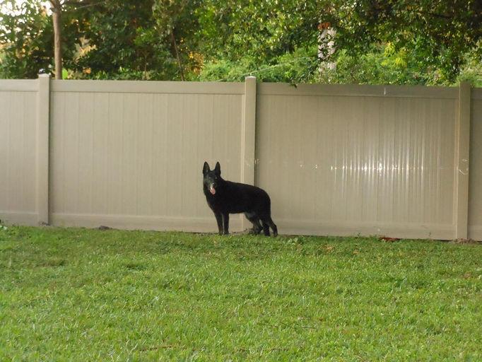 Adobe fence jett.jpg