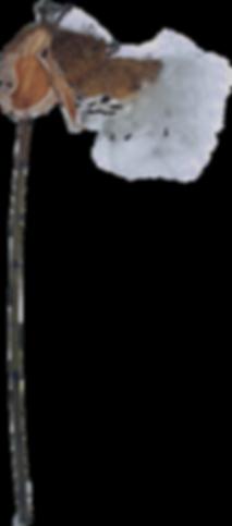 asclepiaskopie.png