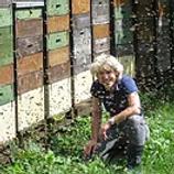 Bienenzucht.png