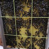 Bienen zählen.jpg