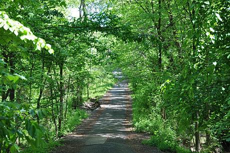 Ashgrove Lane