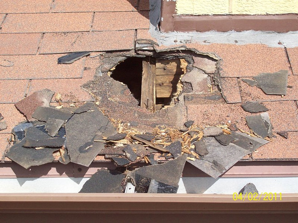Northern Illinois Attic Restoration & Raccoon Damage Repair | MCHENRY