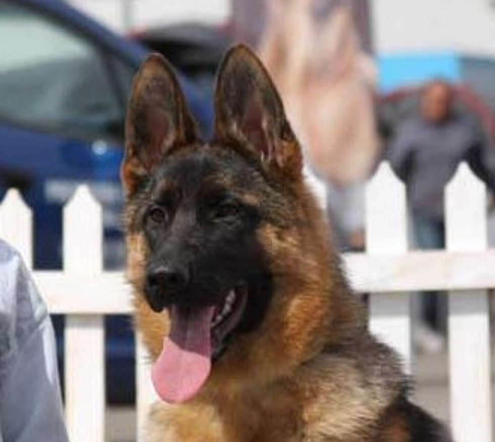 BIS puppy CAC Suceava 2014 Ferrine