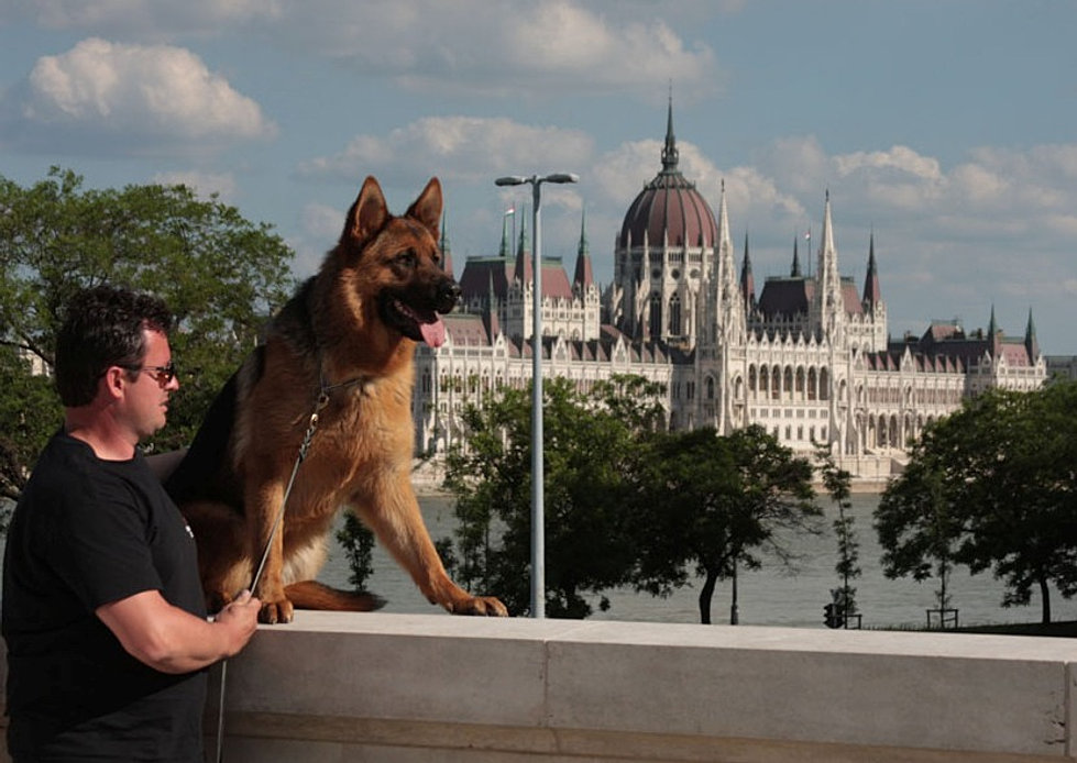 Budapesta World Dog Show 2013