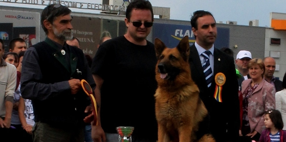 CACIB Suceava mai 2015 Best Veteran in Show RED DARKO