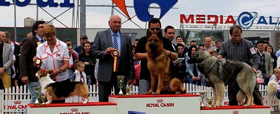 CACIB Suceava mai 2015 ROcks BOG1