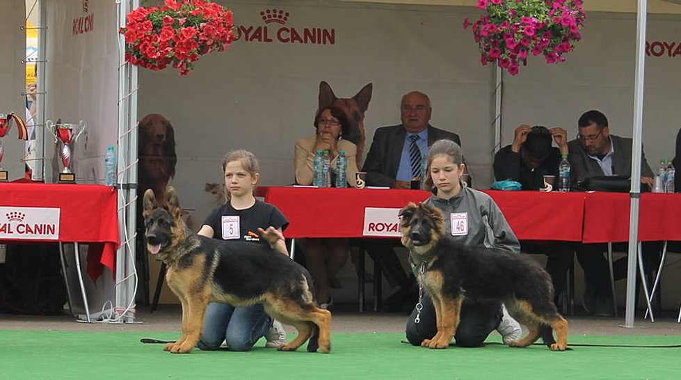 Arim si April CACIB Suceava mai 2015 la  Best Baby in Show