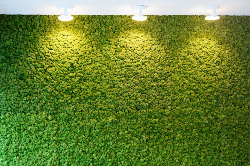 Стена из моха